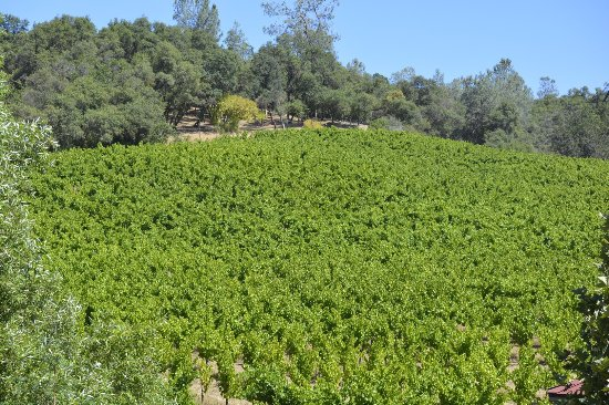 David Girard Vineyards: photo3.jpg