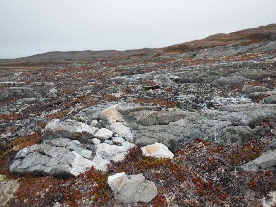 Quirpon Island, Канада: Alpine terrain, beautiful and rugged. Very walkable