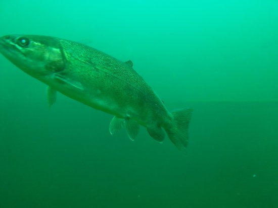 Ottawa, OH: Big friendly fishes - They nudge you to get fed