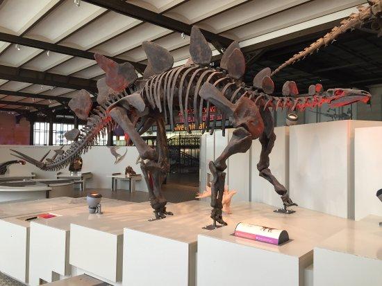Museo de Ciencias Naturales: photo0.jpg