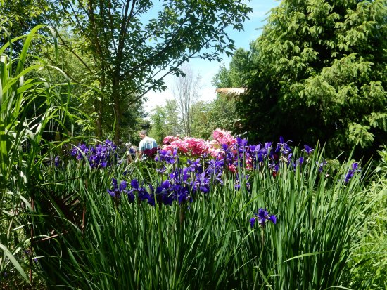 Perth, Canadá: Irises and Peonies