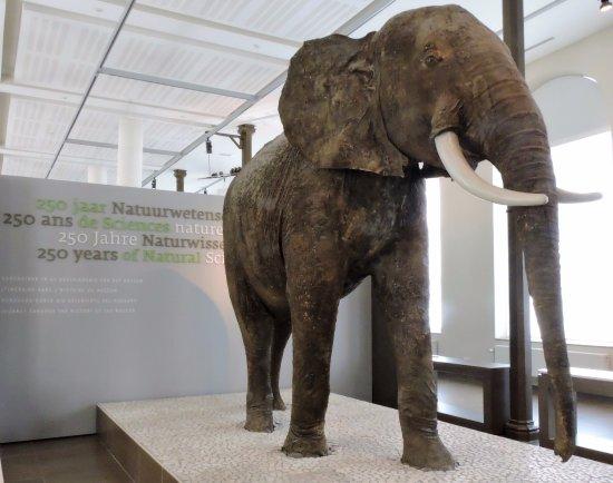Museo de Ciencias Naturales: Acervo do museu