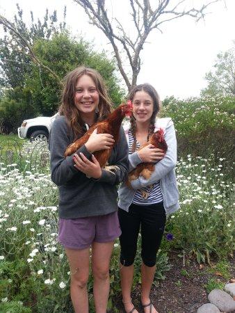 Pirongia, นิวซีแลนด์: Chickens with Friends