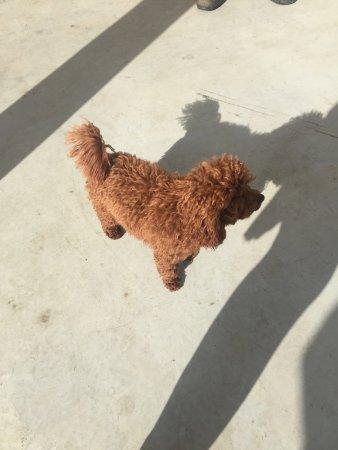 Marananga, Αυστραλία: Billy the Tscharke's Winery dog
