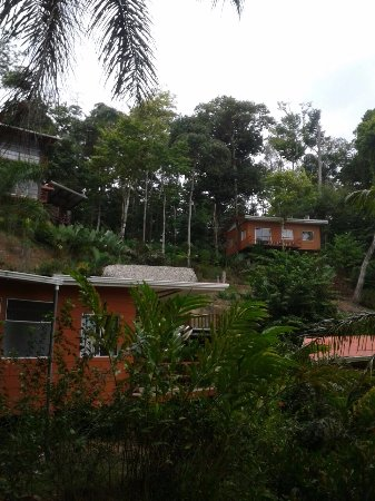 Mar y Selva Ecolodge Photo