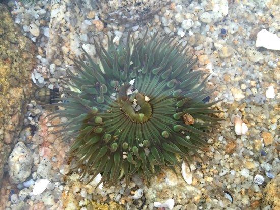 Asilomar State Beach: photo0.jpg