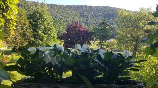 Hotel Anthon: Vue sur le superbe jardin de ma chambre, avec au fond le parc régional des Vosges du Nord