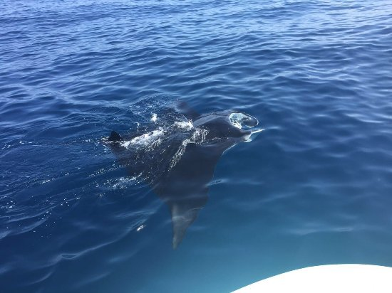 Holbox Island, Meksika: Increíbles encuentros durante nuestro tour!!!
