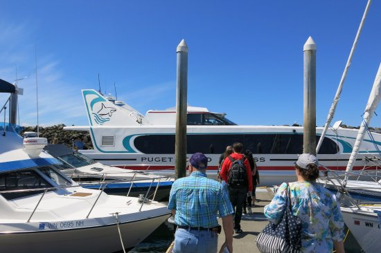 Puget Sound Express - Day Trips: Super fast and comfortable boat with big windows and ample viewing off the bow.