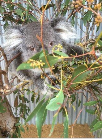Seddon, أستراليا: Some of the residents