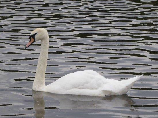 Bolton, UK: photo1.jpg
