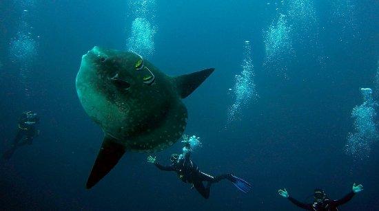 Dragon Dive Bali
