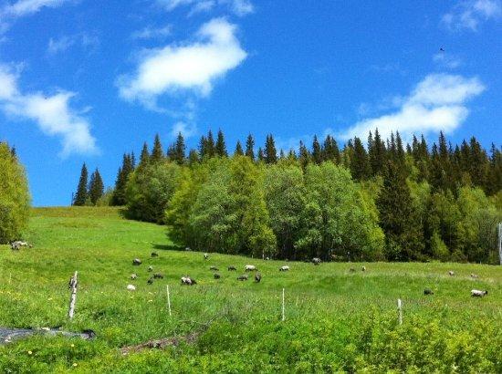 Undersaker, السويد: Summer
