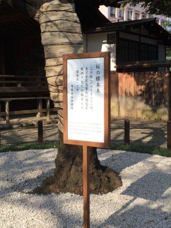 Yasukuni Shrine: 標本木