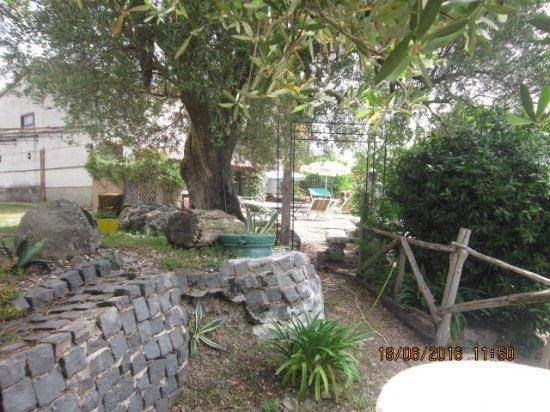 Giardino con ulivi picture of locanda del sorvo futani - Giardino con ulivi ...