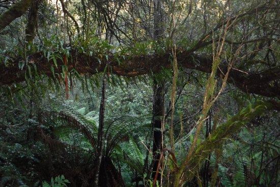 Waratah, Australia: photo1.jpg
