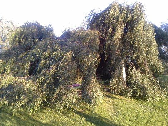Hatanpää Arboretum: Hatanpaa Arboretum