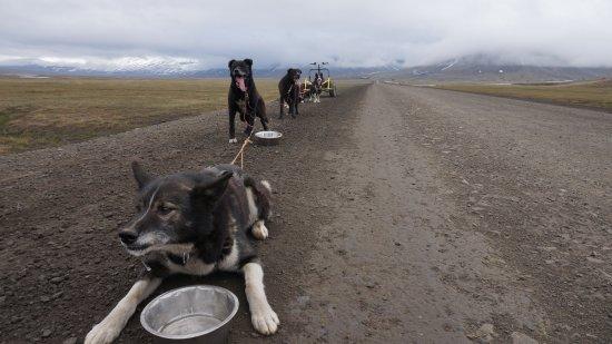 Longyearbyen, Νορβηγία: stoppage during a ride