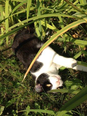 Das Lehmhaus am Anger: Katze Paula wartet auf Streicheleinheiten