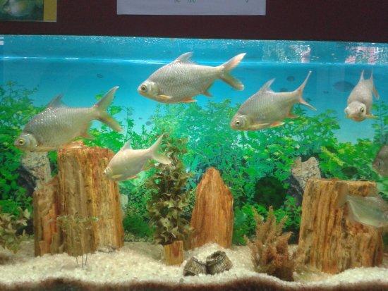 fish aquarium picture of thiruvananthapuram zoo trivandrum