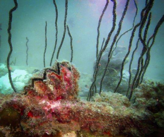 Ocean Dream Divers: so beautiful