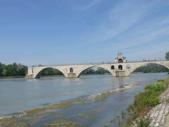 Pont Saint-Bénézet (Pont d'Avignon) : Ponte di Benezet con flora in primo piano