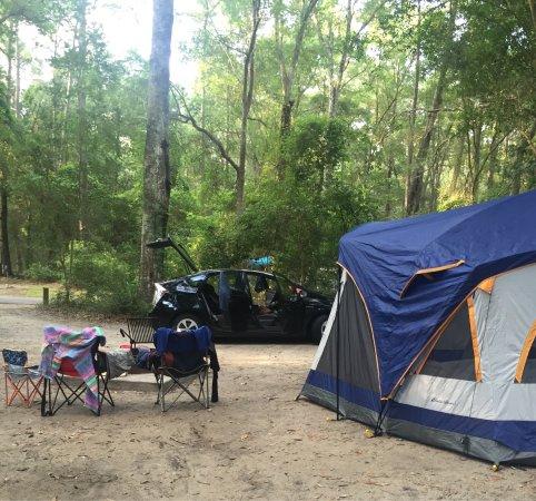 Carolina Beach State Park: photo4.jpg