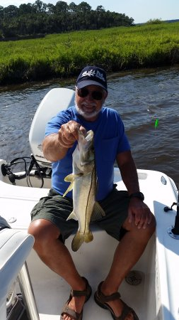 Holly Hill, Φλόριντα: This snook couldnt resist a free lined live shrimp