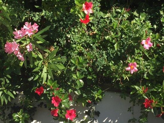Bild von jardin botanique for Jardin botanique nice