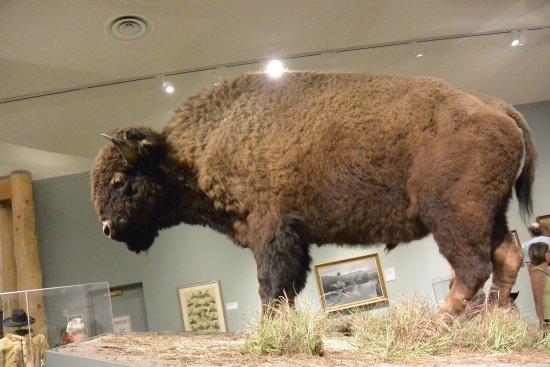 Buffalo Bill Center of the West: photo6.jpg