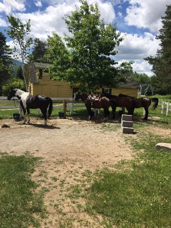 Franconia, NH: Photo of a few of the horses. Middle was mine, named Bud