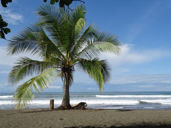 Playa Matapalo, Costa Rica: Beach in front of Charlie's Jungle house, perfect!