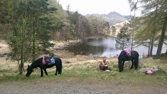 Murthwaite Green Trekking Centre Day Rides: Picnic by Blea Tarn - one of our 5 day rides