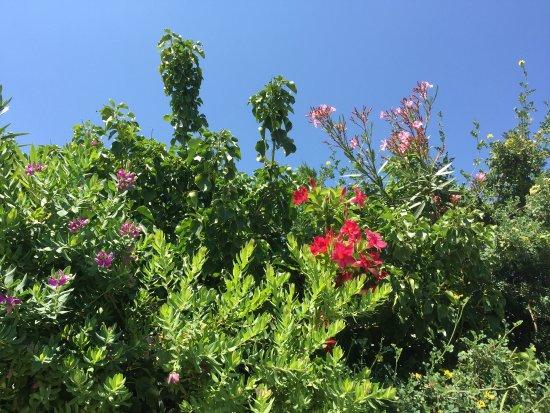 Bild von jardin botanique for Jardin botanique 78