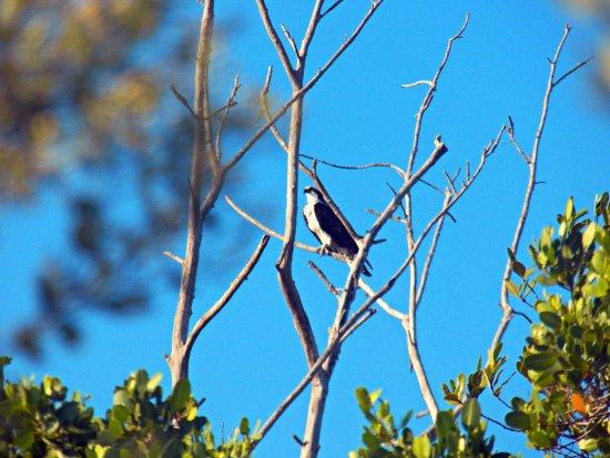Bradenton, FL: Seahawk