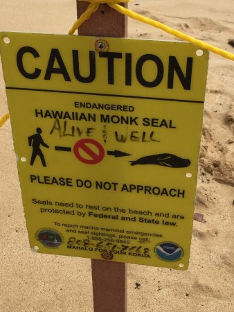 Poipu Beach Park: Volunteers protect the Monk Seals