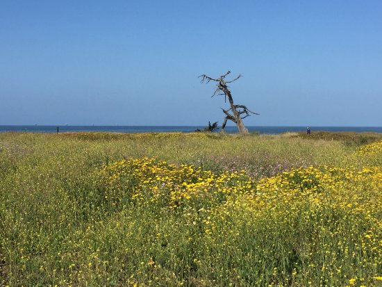 Carpinteria, Kalifornien: Running on the bluffs