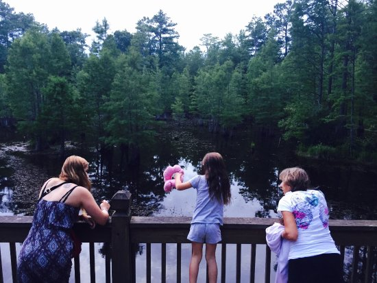 Raeford, Karolina Północna: Feeding the turtles with our left over breadcrumbs off the patio deck.