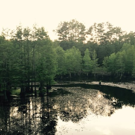 Raeford, Carolina del Norte: This is their private Turtle Lake over looking the back dining patio.