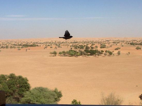 Al Maha, A Luxury Collection Desert Resort & Spa: Vu à partir de la terrasse du bar