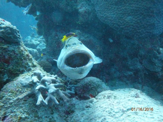 George Town, Grand Cayman : Cleaning Station