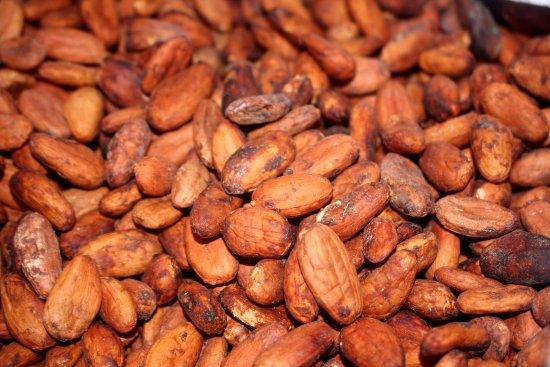 Bribri, Costa Rica: production de cacao avant d´aller à la cascade