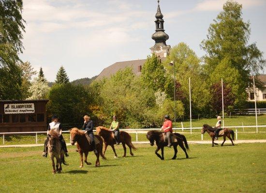 Ampflwang, Austria: Kompetetnte Reitunterricht für alle Niveau