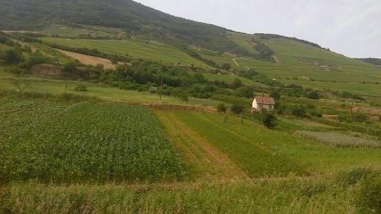 Tarcal, المجر: IMAG1832_large.jpg