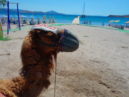 Summer Garden Apart Hotel: Camel Beach -----Boat Trip