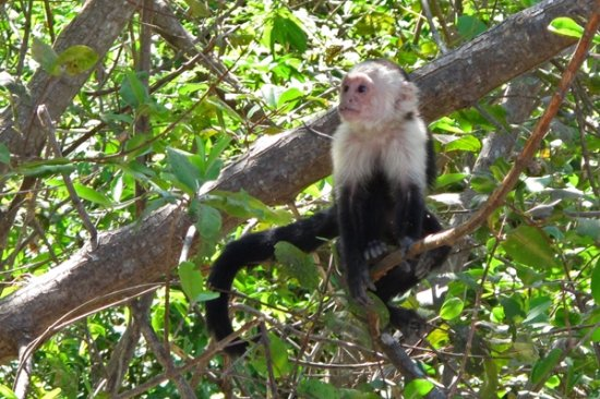 Tours Your Way: White Face Monkey - Palo Verde Boat Tour