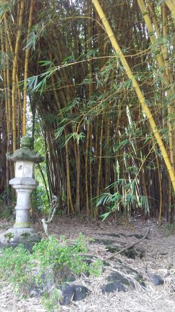 Liliuokalani Park and Gardens Photo
