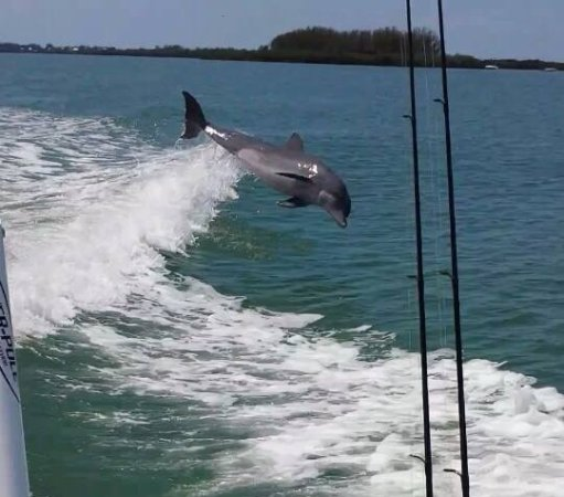 Cape Haze, FL: High Flying Dolphin