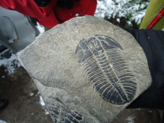 The Burgess Shale Geoscience Foundation