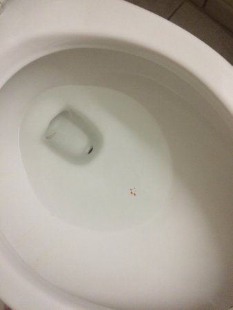 "Lampasas, Τέξας: Feces in a toilet in a ""freshly cleaned room"". Don't stay here!"
